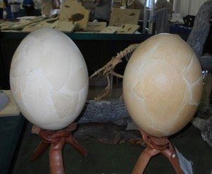 Elephant Bird Eggs