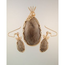 Horn Coral Fossil Set